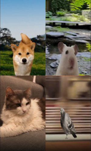 פילטר שיחת ווידאו עם חיות